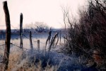 lonely-fence-line_w725_h485