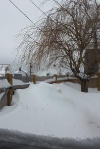 Jan snow 1
